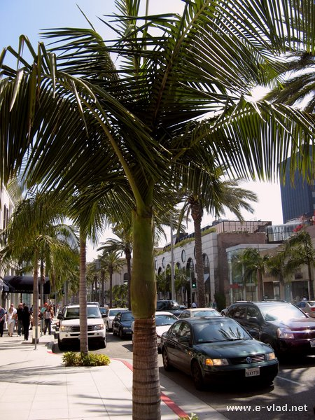 Rodeo Drive street view