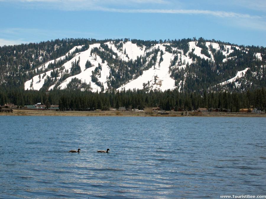 Big Bear, California - Ducks swimming in the beautiful Big Bear Lake with the San Bernandino Mountains in the background