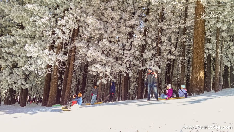 Frazier Park, California - Small children enjoy sledding on the slopes near Chula Vista Campground