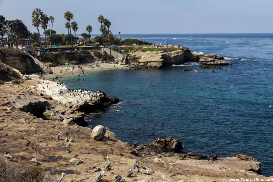 La Jolla, California - Rocks and birds near La Jolla Cove