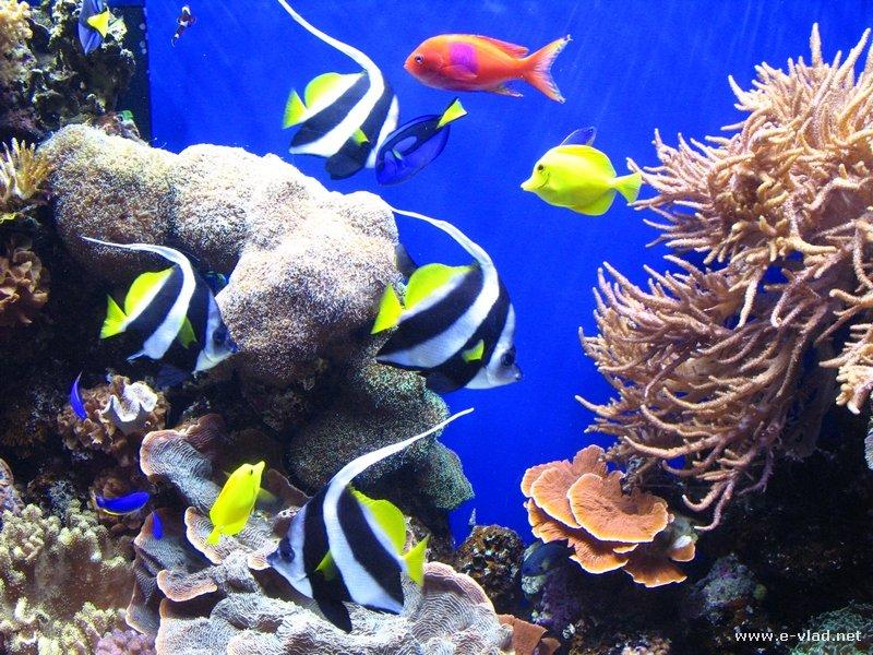Monterey California Colorful Fish At The Monterey Aquarium