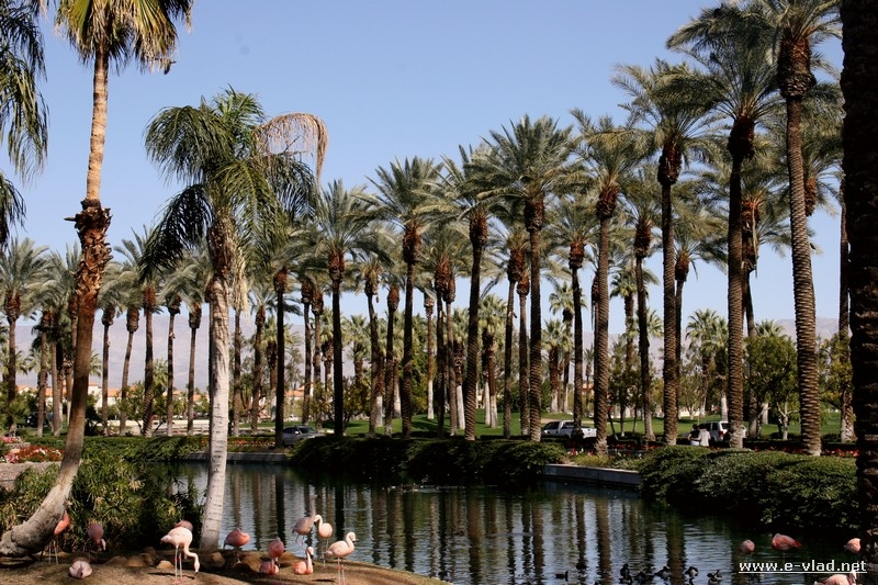 Tall palm trees and flamingos line up the entrance to the JW Marriott Resort in Palm Desert