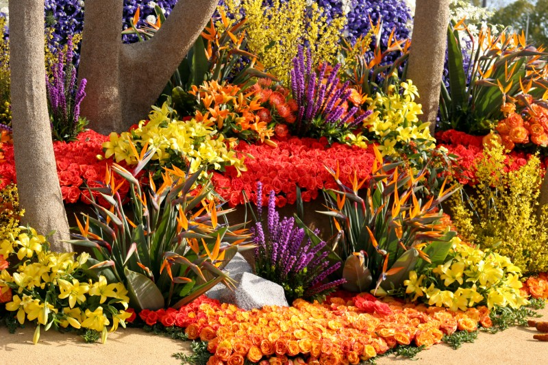 A Rose Parade float shows amazing combination of roses and bird of paradise flowers.