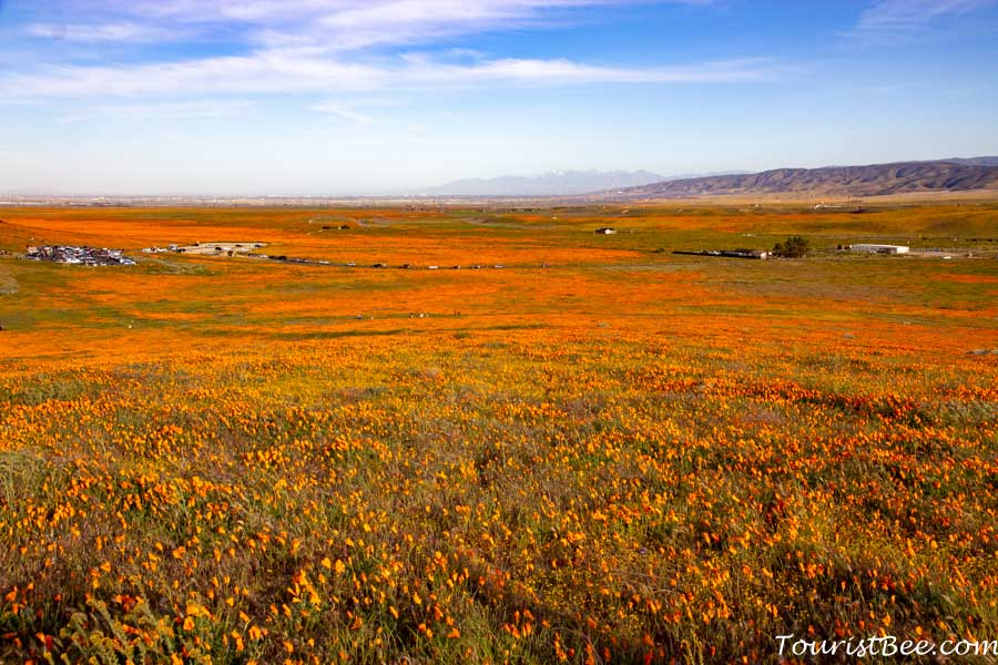 Antelope Valley California Poppy Reserve - Snow covered mountains seen in the distance with bright orange poppies in the foreground
