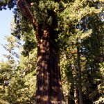 Travel photos from Avenue of the Giants