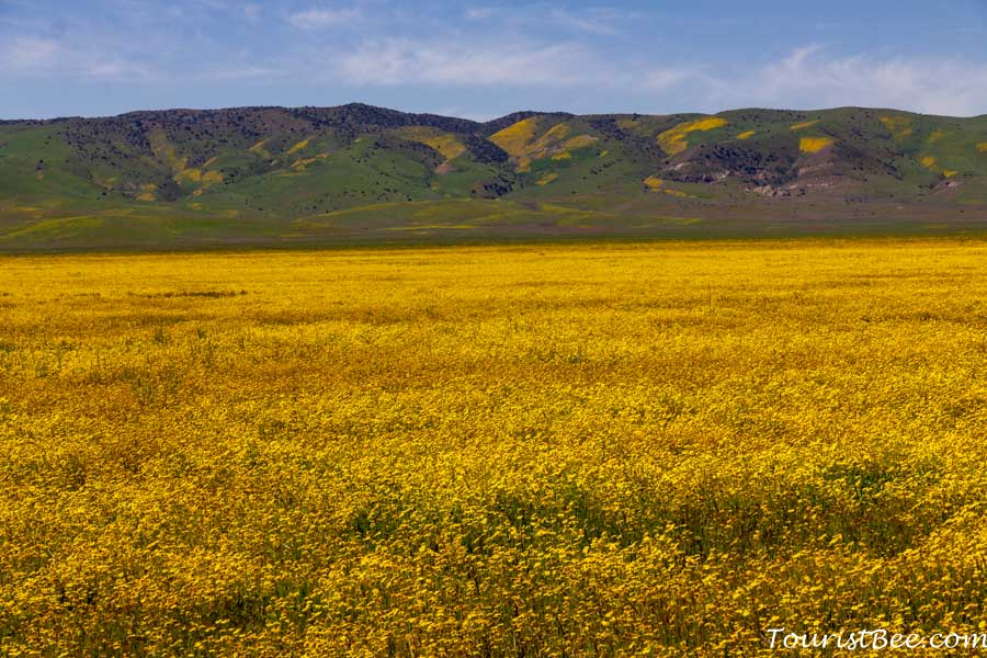 Carrizo Plain National Monument is an amazing place for experiencing the wildflowers of Southern California
