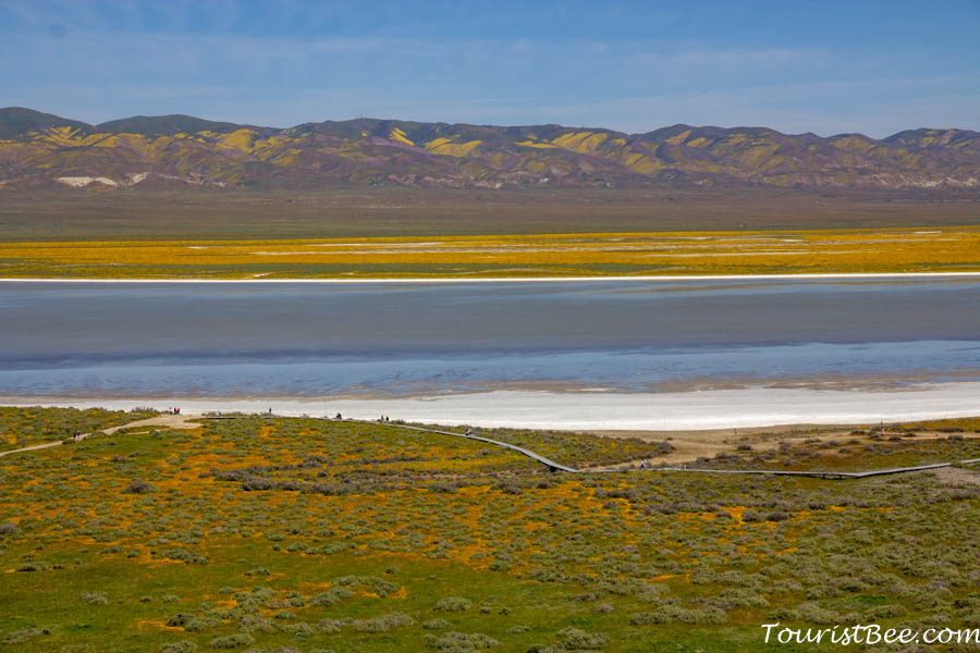 Carizzo Plain National Monument - The Soda Lake Overlook provides a great panoramic view of large areas covered by wildflowers