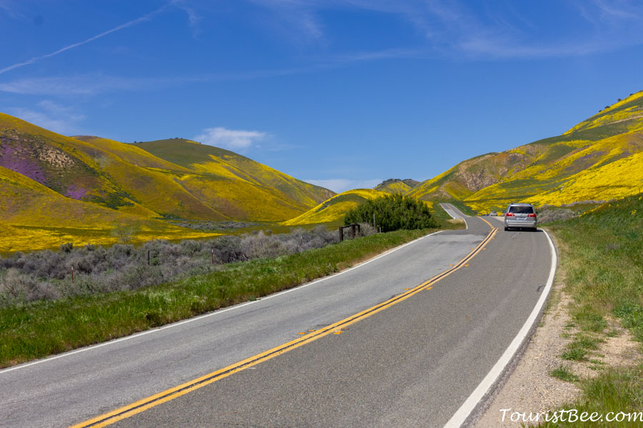 Highway 58 winds its way through hillsides covered in wildflowers of Southern California