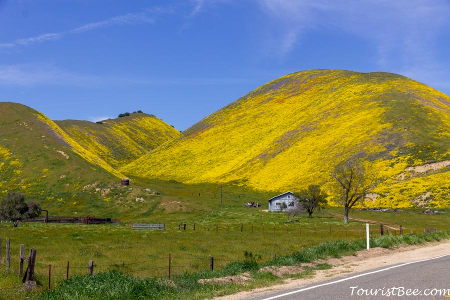 Carizzo Plain National Monument - Small house among hills covered in yellow flowers