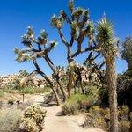 Travel photos from Joshua Tree National Park