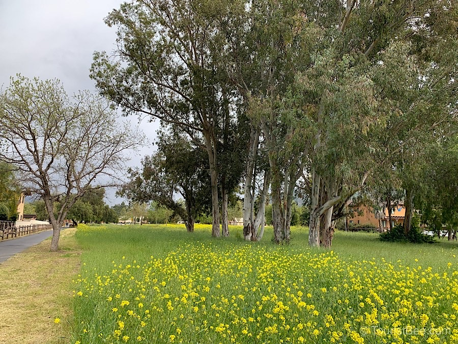 Ojai, California - Beautiful wildflower field on the Ojai Valley Trail