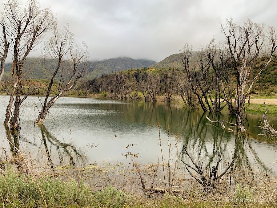 The larger Lower Rose Lake during spring has plenty of water. Recently burned trees bring an eerie look to this area.