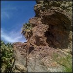 Travel photos from Palm Springs Indian Canyons