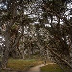 Travel photos from Point Lobos