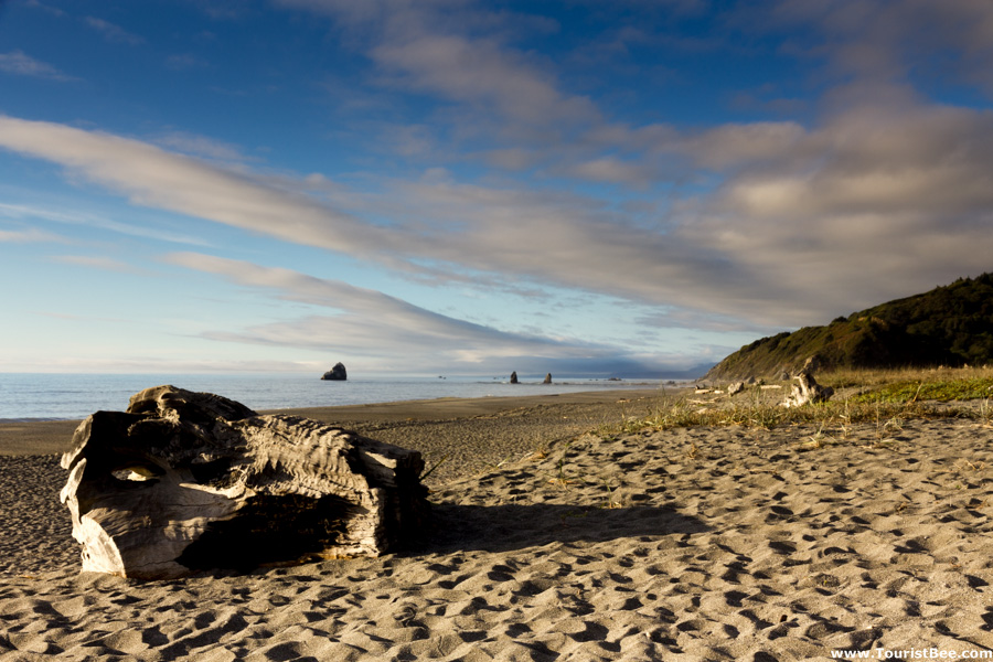 Redwood Creek Beach Park - Large tree root on the beach at Redwood Creek