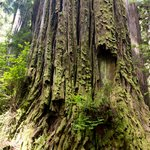 7 great places to see California's amazing Redwood trees