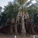 Travel photos from Salton Sea