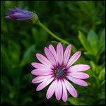 Travel photos from San Diego Botanic Garden
