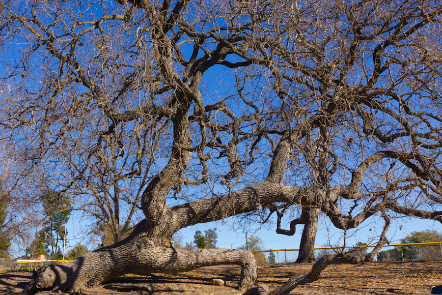 Botanical Gardens Thousand Oaks Thousand Oaks California Peaceful Shaded Pathway Through The