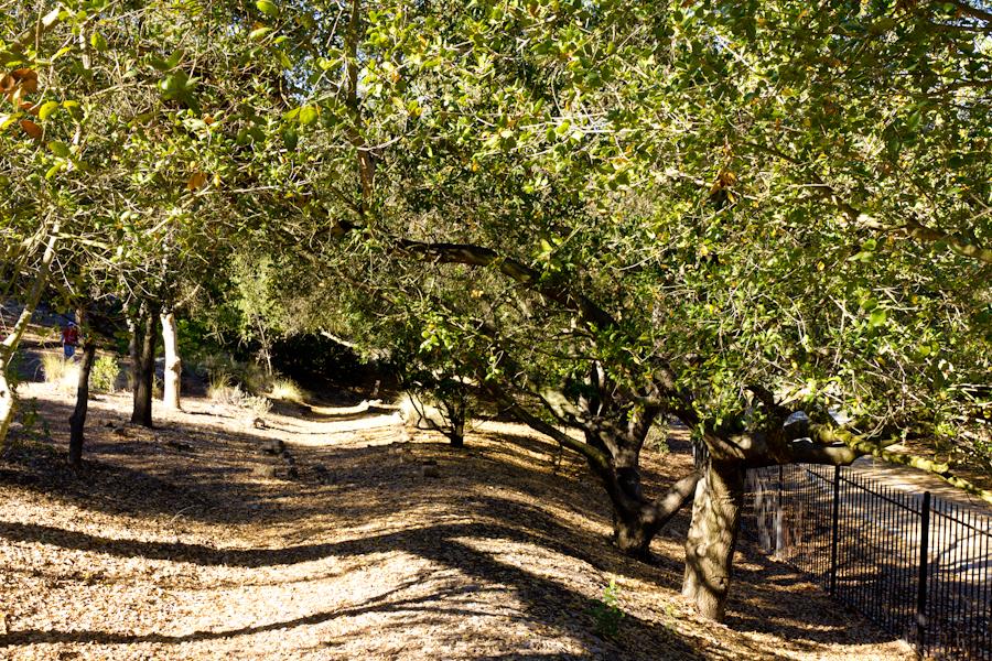Thousand Oaks California Peaceful Shaded Pathway Through The Thousand Oaks Botanical Garden
