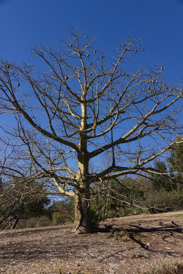 Thousand Oaks Botanical Gardens Thousand Oaks California Peaceful Shaded Pathway Through The