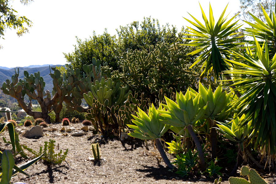 Thousand Oaks California The Cactus Garden Inside The Botanical Garden Overlooks The Entire