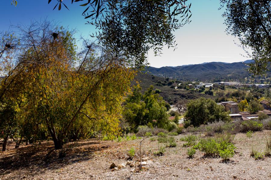 Thousand Oaks California Trees Among Arid Landscape At Thousand Oaks Botanical Garden