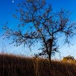 Travel photos from Thousand Oaks Botanical Gardens