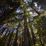 Travel photos from Trees of Mystery Klamath