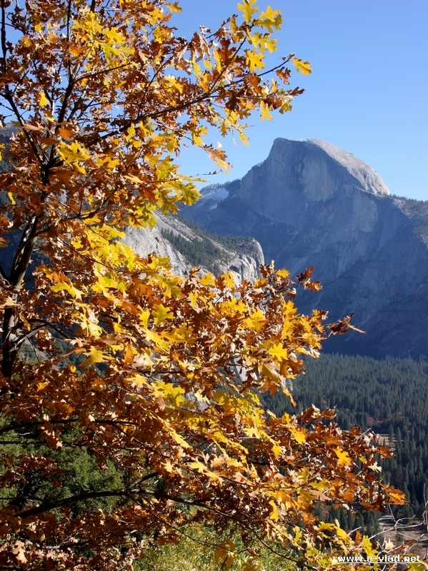 An awesome view of Half Dome through golden November foliage.