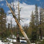 Travel photos from Yosemite National Park