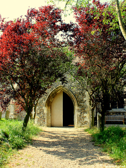 Ickleton, England - Beautiful trees lining up the entrance to St Mary's Church.