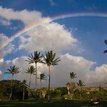 Maui, Hawaii - Parrot thumbnail.