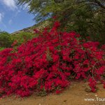Travel photos from Oahu Koko Crater Botanical Garden