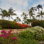 Travel photos from Oahu Koolina