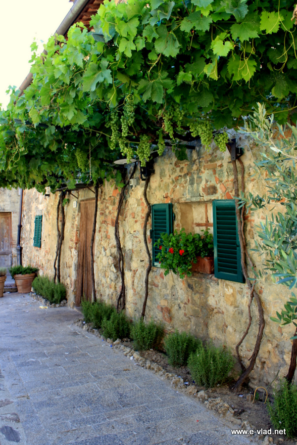 Monteriggioni, Italy - Beautiful stone cottage covered with grape vines