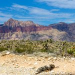 Travel photos from Red Rock Canyon Nevada