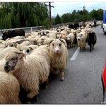 Travel photos from Corbii din Piatra