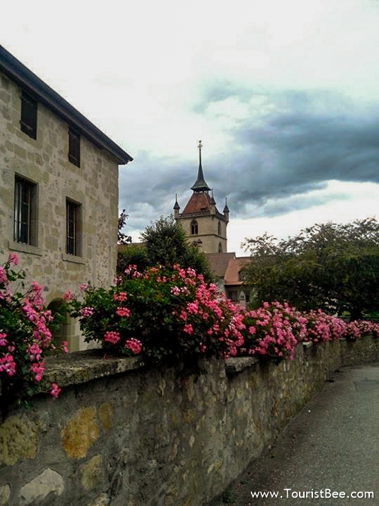 Estavayer le Lac, Switzerland - Beautiful flower covering a stone wall and buildings with the tower of Saint-Laurent church in the background