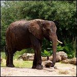 Travel photos from Orlando Florida Animal Kingdom