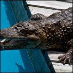 Travel photos from Orlando Florida Gatorland