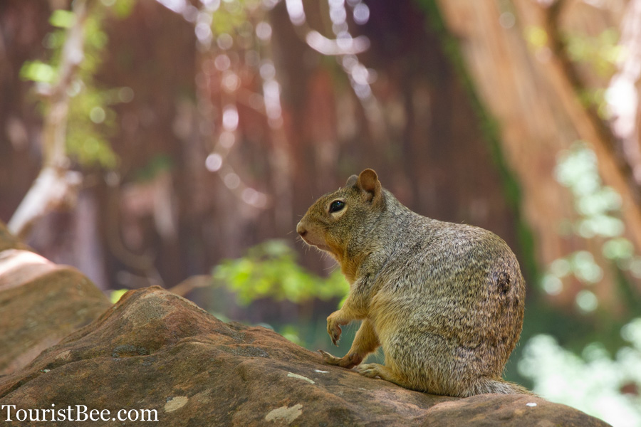 Squirrel resting on a rock near Upper Emerald Pools