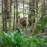 Travel photos from Olympic National Park