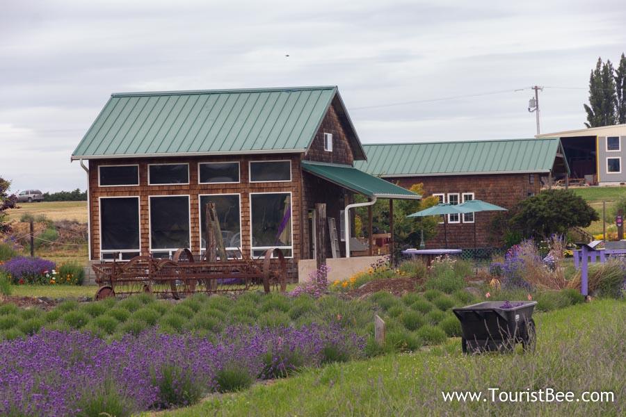 Sequim, Washington - Lavender fields at local farm