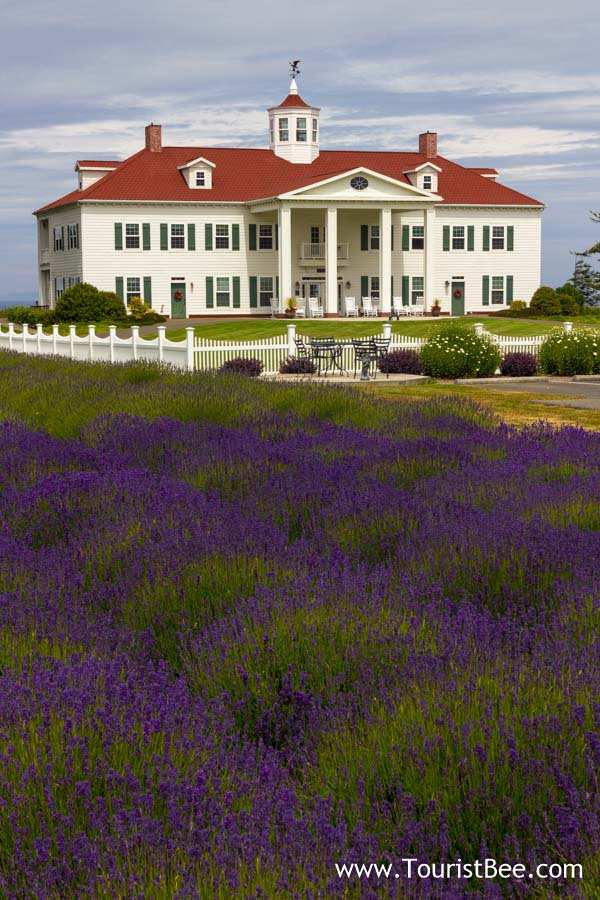 Sequim, Washington - Lavender fields at the George Washington Inn