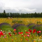 Travel photos from Sequim