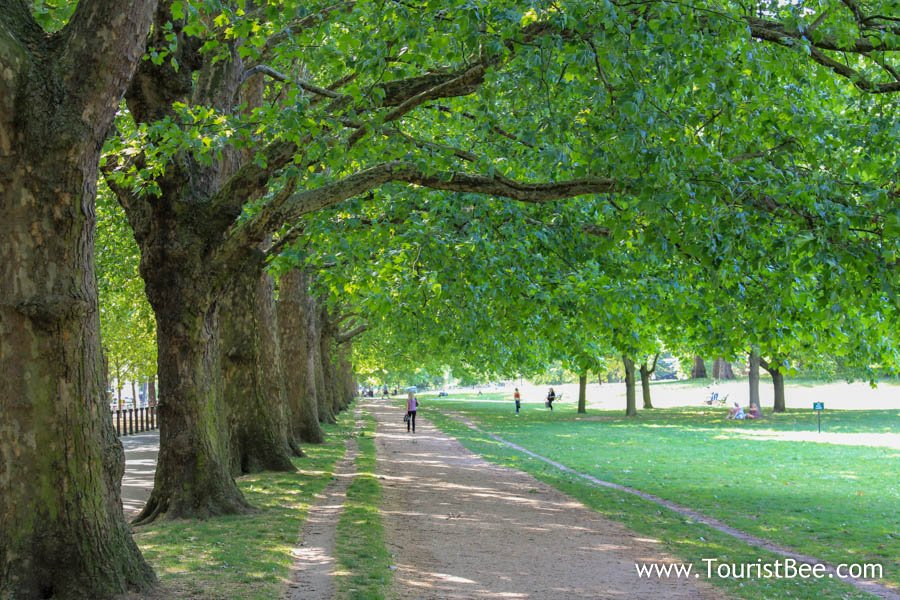 People walking under shady trees at Hyde Park