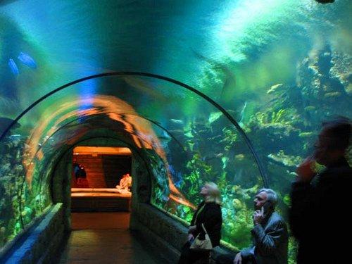 The glass tunnel at Shark Reef Aquarium